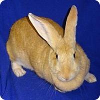 Adopt A Pet :: Linney - Woburn, MA