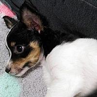 Adopt A Pet :: Jiggs - Tomball, TX