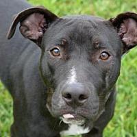 Adopt A Pet :: BEAUTY - West Palm Beach, FL