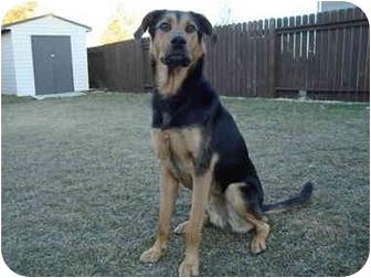 German Shepherd Dog/Greyhound Mix Dog for adoption in Saskatoon, Saskatchewan - Eddie