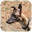 Photo 2 - Greyhound Dog for adoption in Santa Rosa, California - Donald