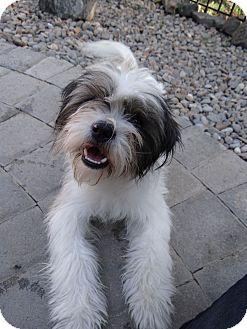 Terrier (Unknown Type, Medium) Mix Dog for adoption in Salem, Oregon - Tres