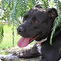 Adopt A Pet :: Kara - Mission Viejo, CA