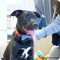 Adopt A Pet :: Squeak - Marietta, GA