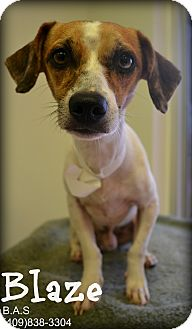 Terrier (Unknown Type, Small) Mix Dog for adoption in Beaumont, Texas - Blaze