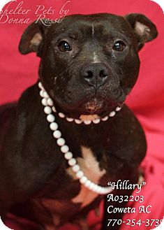 Pit Bull Terrier Mix Dog for adoption in Newnan City, Georgia - Hillary