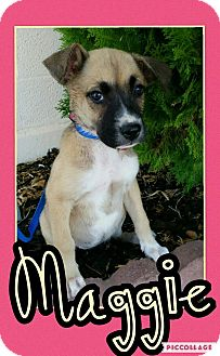 Jindo/Mastiff Mix Puppy for adoption in Edwards AFB, California - Maggie