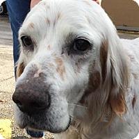 Adopt A Pet :: ARTHUR - Pine Grove, PA