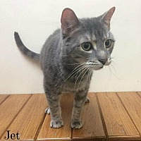 Adopt A Pet :: Jet - Mansfield, OH