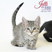 Adopt A Pet :: Jelli - Laplace, LA