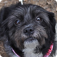 Adopt A Pet :: Molly - Atlanta, GA