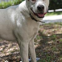 Adopt A Pet :: Carlos - Jacksonville, FL