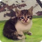 Adopt A Pet :: Orian - West Palm Beach, FL