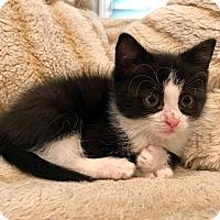 Adopt A Pet :: Luna - Naperville, IL