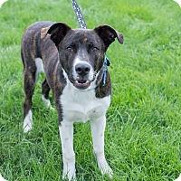 Adopt A Pet :: Brin - Ogden, UT