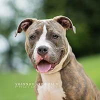 Adopt A Pet :: PATRICIA--URGENT!!!! - Allen town, PA
