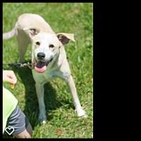 Adopt A Pet :: Tess - Franklin, TN