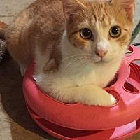 Adopt A Pet :: Jefferson - Morganton, NC