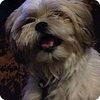 Adopt A Pet :: Oden - Albany, NY