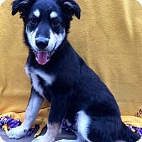 Adopt A Pet :: ROMEO - Irvine, CA