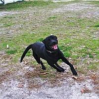 Adopt A Pet :: Joey - Smithfield, NC