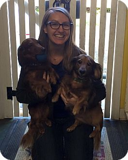 Dachshund Dog for adoption in Clarion, Pennsylvania - LILLY