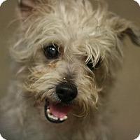 Adopt A Pet :: Bucky - Canoga Park, CA