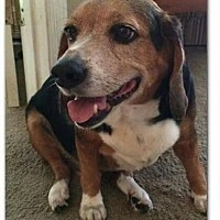 Adopt A Pet :: Reggie - Glen St Mary, FL