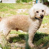 Adopt A Pet :: Tiger - Daleville, AL