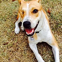 Adopt A Pet :: Rosie- Courtesy Listing - Baton Rouge, LA