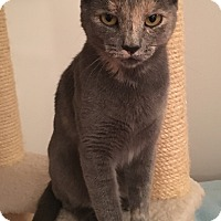 Adopt A Pet :: Merlot - Salem, NH