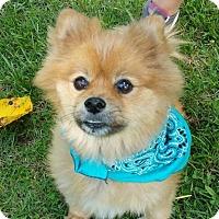 Adopt A Pet :: Toby - Temple, GA