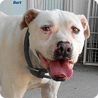 Adopt A Pet :: Bart - Oskaloosa, IA