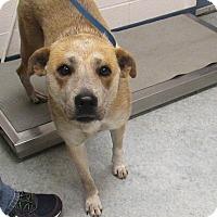 Adopt A Pet :: Leslie - Warrenton, NC