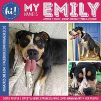 Adopt A Pet :: Emily - New Port Richey, FL