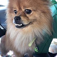 Adopt A Pet :: Bruno - Astoria, NY