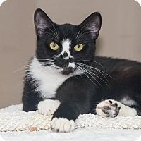 Adopt A Pet :: Jade - Elmwood Park, NJ