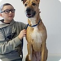 Adopt A Pet :: Luka-Prison Graduate - Elyria, OH