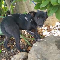 Adopt A Pet :: LIZZY - St. Thomas, VI