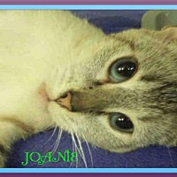 Adopt A Pet :: JOANIE - Fort Walton Beach, FL