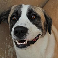 Adopt A Pet :: LEFTY: Low Fees - Red Bluff, CA