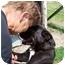 Photo 1 - Boston Terrier/German Shepherd Dog Mix Dog for adoption in Sumner, Iowa - Lucky