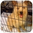 Photo 1 - Terrier (Unknown Type, Medium)/Cairn Terrier Mix Dog for adoption in Fowler, California - Holly