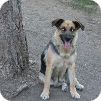 Shepherd (Unknown Type) Mix Dog for adoption in Merritt, British Columbia - Blue Eyes