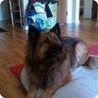 Adopt A Pet :: Tazzy - Alliance, NE