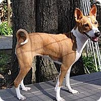 Adopt A Pet :: Jill - Seminole, FL
