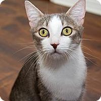 Adopt A Pet :: Annie - Irvine, CA