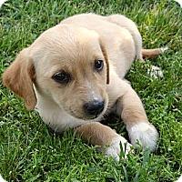 Adopt A Pet :: *Nora - Westport, CT