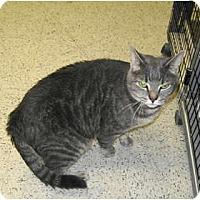 Adopt A Pet :: Katie - Warminster, PA