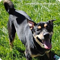 Adopt A Pet :: Zander - Los Angeles, CA